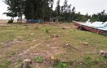 Xóa sổ 2.000 ha rừng phòng hộ