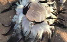 Sinh vật không ai biết là gì dạt vào  bờ biển Úc