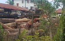 Một chiến sĩ công an tử vong khi trông coi gỗ lậu của trùm Phượng râu