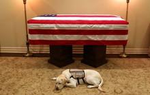 """Chuyện xúc động về chó cưng của cố Tổng thống Bush """"cha"""""""