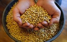 Mỹ mạnh tay với thực phẩm organic dỏm