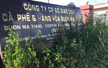 Đấu giá Sàn Giao dịch cà phê Buôn Ma Thuột