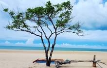 10 cây cô đơn sống ảo của giới trẻ Việt Nam