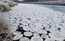 """Lạ lùng """"bánh kếp băng"""" phủ kín dòng sông Scotland"""
