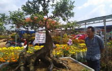 Chiêm ngưỡng cây khế hình chó, dừa 15 ngọn giá nửa tỉ ở Phú Quốc