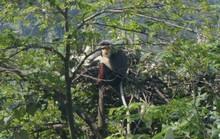 Ngắm nữ hoàng linh trưởng trên bán đảo Sơn Trà