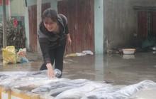 Ngư dân trúng đậm cá thu vào những ngày giáp Tết Mậu Tuất