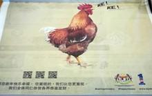 Malaysia xin lỗi vì để gà sủa gâu gâu