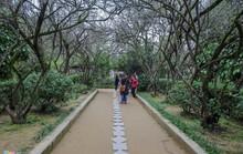 Nhà vườn 5.000 m2 cổ nhất xứ Huế