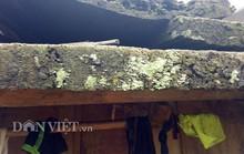 Ngôi làng 100% hộ nghèo nhưng nhà nào cũng làm bằng gỗ quý pơmu