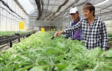 Nông dân ngoại ở Đà Lạt
