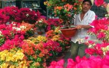 Hoa cảnh, cây kiểng trưng Tết tràn về phố Sài Gòn