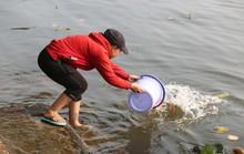 Cá chép đưa ông Táo bị xử đẹp khi vừa đến sông Sài Gòn