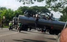 Venezuela: Người dân ném chết gia súc để lấy cái ăn