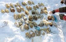 Tìm ra nguồn gốc 54 bàn tay người ở Nga