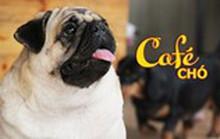 Cà phê cún cưng, một thế giới đầy thú vị ở Sài Gòn