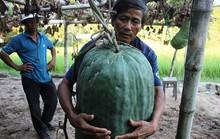 Kỳ lạ: Vùng đất cứ trồng bí đao là có quả to 50kg, 100kg