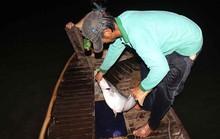 Cao điểm săn cá bông lau ở miền Tây