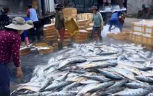 Một tàu cá ở Quảng Ngãi gặp đàn cá khủng khi vừa ra cửa biển