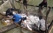 Xuất khẩu cá tra: Vừa mừng vừa lo!