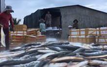 Ngư dân Quảng Ngãi trúng mẻ cá hiếm trị giá một tỷ đồng
