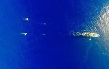 Đảo rác thải bằng diện tích 3 nước trên Thái Bình Dương