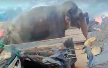 Đi tị nạn, 10 người Rohingya bị voi giết chết