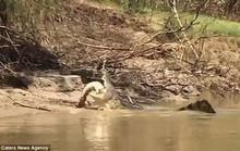 Kinh hoàng cảnh cá sấu khổng lồ xé xác đối thủ