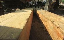 Kiểm lâm bị tố làm ngơ với nạn phá rừng: Gỗ lậu cất giấu gần trạm bảo vệ rừng