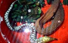 Sự thực về 2 con cá lạ ở Huế bị giết