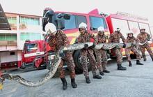 Malaysia: Giải cứu trăn 7 m bị tai nạn giao thông