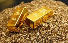 Xử phạt hành chính sai, UBND TP HCM phải trả 10 kg vàng