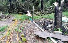 Tiếc đứt ruột nhìn cảnh thủ phủ sầu riêng Lâm Đồng tan hoang vì lốc xoáy