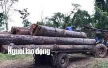 Quyền cục trưởng  Kiểm lâm lên tiếng về vụ bắt trùm gỗ lậu Phượng râu