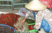 36,25% mẫu ớt bột, ớt khô nhiễm độc tố aflatoxin