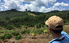 Để mất rừng, nhiều cán bộ bị đề nghị kỷ luật