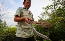 Cao thủ ngao du khắp Sài Gòn săn rắn, bắt chuột