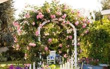 Khu vườn trở nên lãng mạn nhờ cổng vòm rực rỡ sắc hoa