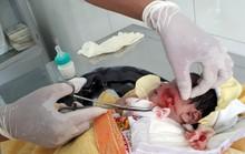 Cứu kịp thời bé sơ sinh bị chôn sống