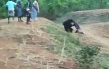 Ấn Độ: Chụp ảnh với gấu, tài xế taxi bị gấu đánh chết