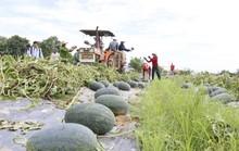 Một tuần, nhóm đồng hương giải cứu được 200 tấn dưa hấu