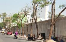 Công trình hạ tầng hại chết cây xanh