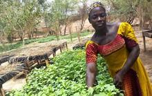 Thoát nghèo nhờ trồng rau hữu cơ