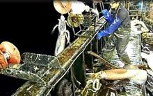 Ý đồ của Trung Quốc sau chương trình đánh bắt mực ống
