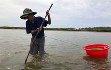 Cao thủ bật mí tuyệt chiêu săn lịch trên sông Trà Khúc