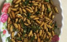 Ngã bổ ngửa với đặc sản côn trùng vùng cao Tây Bắc