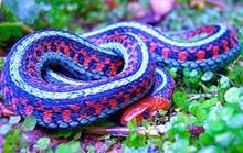 Gặp 10 loài rắn này bạn phải chạy thật nhanh nếu muốn sống