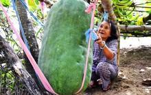 Lạ kỳ trái bí đao có thể giết người ở Bình Định