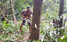 Bắt quả tang 2 đối tượng phá hơn 3.000 m2 rừng đặc dụng ở Phú Quốc