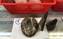 TP HCM: Bắt giữ 1 người Việt mang 12 sừng tê giác quý hiếm
